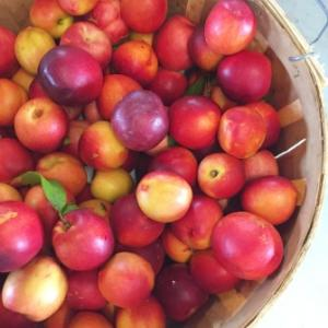 Great-Country-Farms-Peaches-335x335