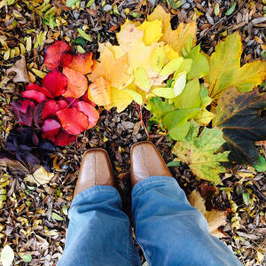 Fall Foliage in Cayuga County