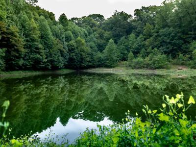 hiking-boyd-big-tree-preserve-lake