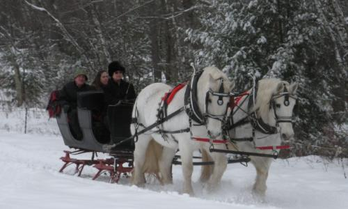 horse-carriage-loon-meadow (1)