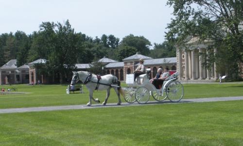 loon-meadow-horse