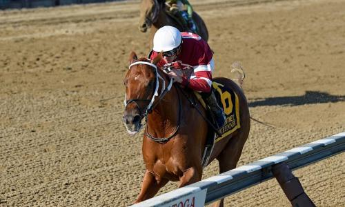 NYRA Horse at Rail