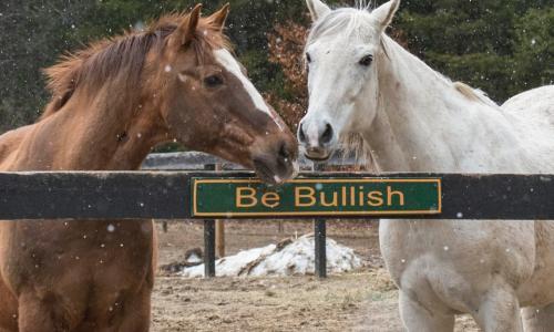 Old Friends at Cabin Creek Be Bullish