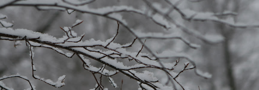 Snow gently blankets tree branches.
