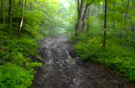 Summer Hill State Forest for TourCayuga
