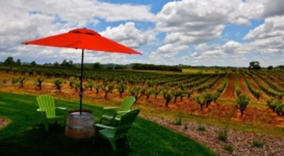 Andis Wines Picnic Area