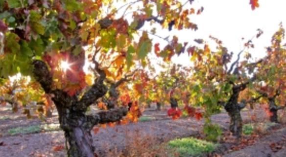 Lodi Wine and Visitors
