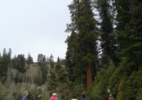 2228P3Ranger Jim with park visitors at the Tall trees grove.jpg