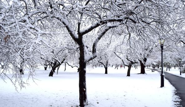 Arboretum in Winter by Anne Tan-Detchkov