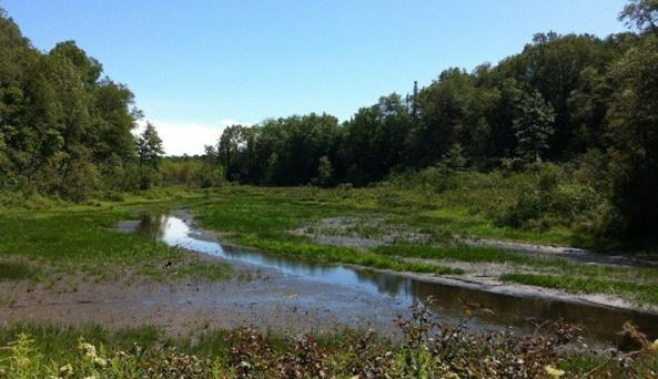 Bear Swamp State Forest