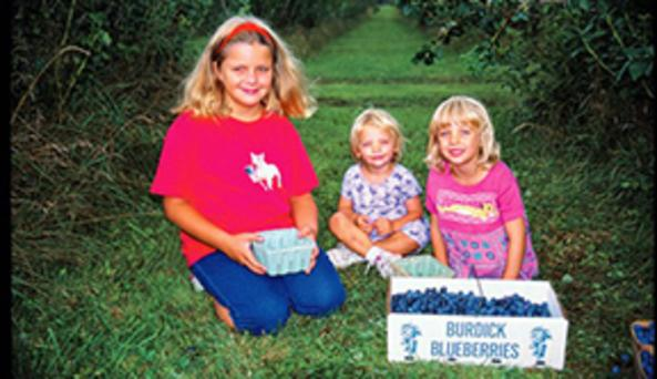 Burdick Blueberries
