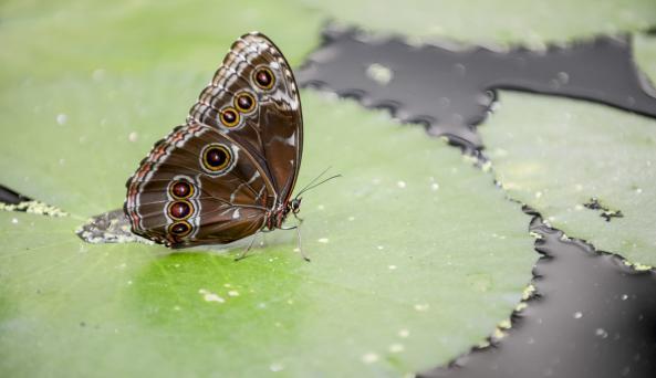 Joseph L. Popp,Jr Butterfly Conservatory