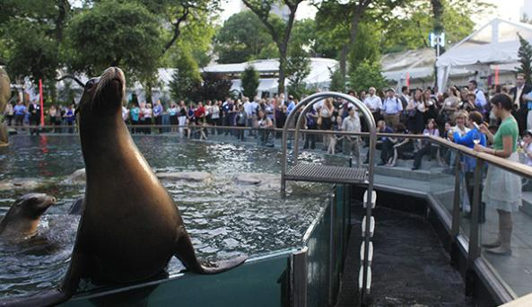 NYS Feed - Central Park Zoo