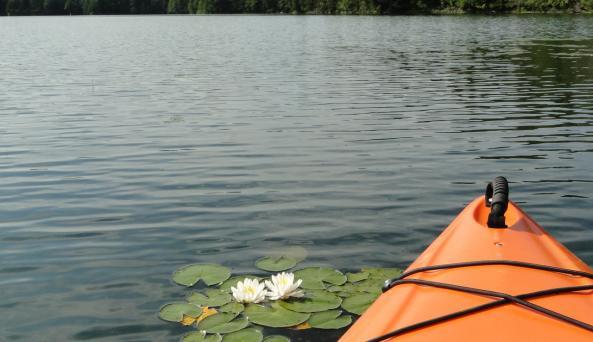 Water Lily at Lapland Lake