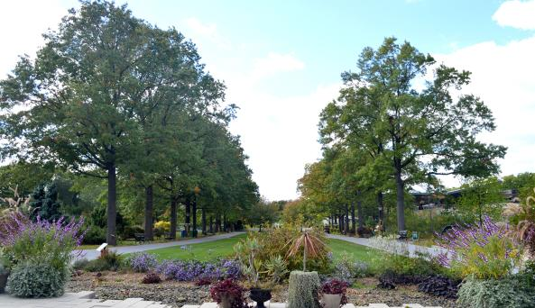 Entrance Plaza in Fall by Anne Tan-Detchkov