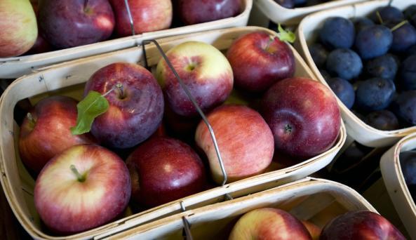 Hurd Orchard