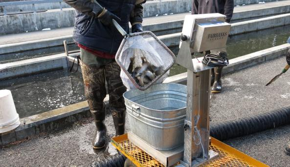 New York State Fish Hatchery