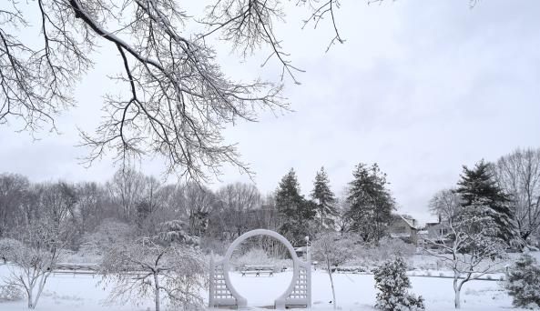 Floral Border in Winter by Anne Tan-Detchkov