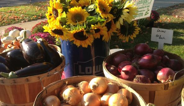Johnstown Farm Market Sunflower