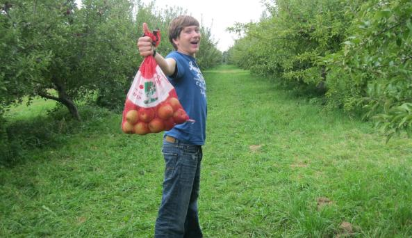 N with apples