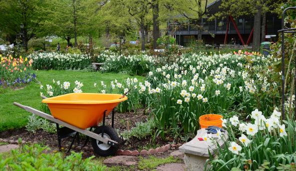 Annual Garden in Spring by Jess Brey