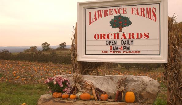 Lawrence Farms Orchard.jpg