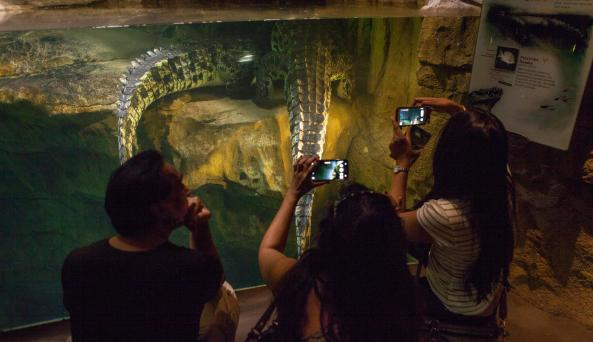 People photographing crocodile tails