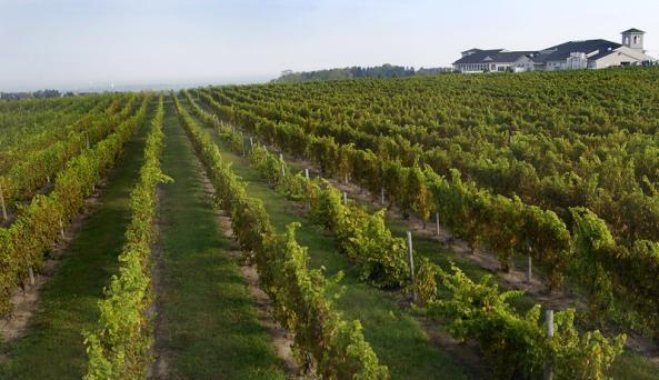 casa-larga-vineyards-and-winery-fairport-vineyards