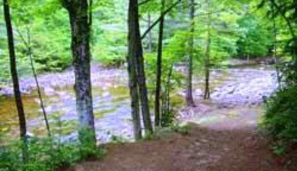 stony creek fam