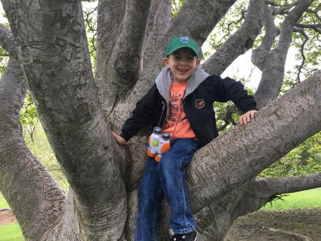 Boy in tree at Highland Park