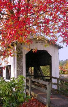 Centennial Bridge in Fall by Janice D Emidio