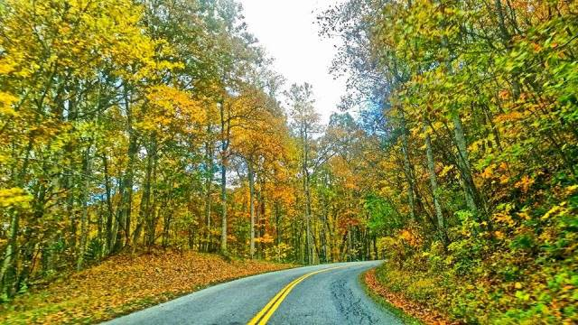 Fall Color Road - Fall Photo
