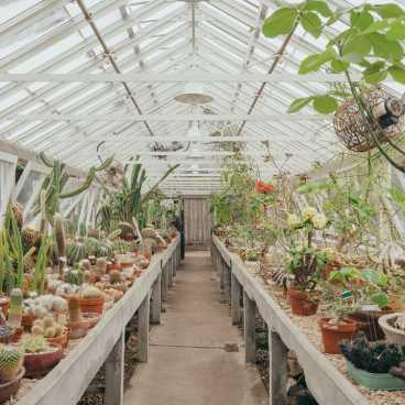 New Orleans Botanical Gardens #2