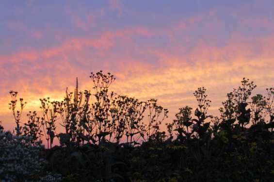 Sunset over the prairie