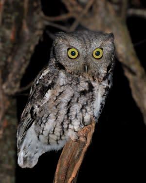 Hudson Highlands Nature Museum Owl Prowl