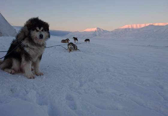 Private Amundsen Style 5 Days Dogsledding Expedition - Polardogs Svalbard