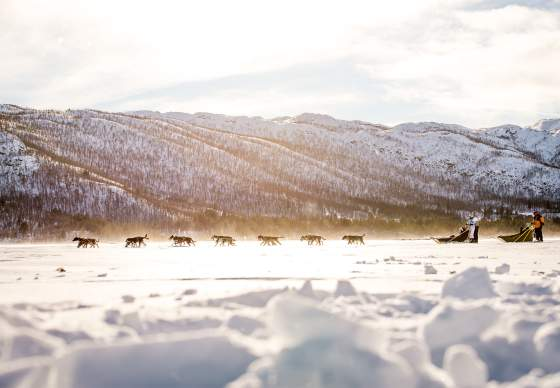 Geilo Dogsledding