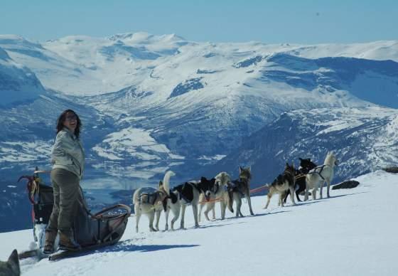 Beito Husky Tours - Hundekjøring, vinter