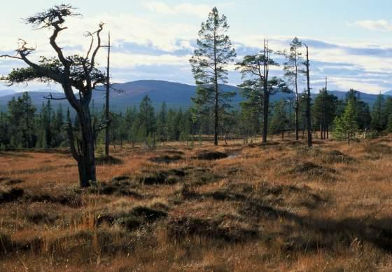 Besøkssenter Nasjonalpark Femundsmarka avd. Røros