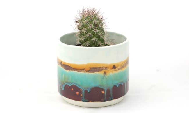 Cactus in a round ceramic planter
