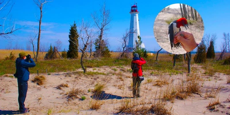 Birding at the Tip of Long Point