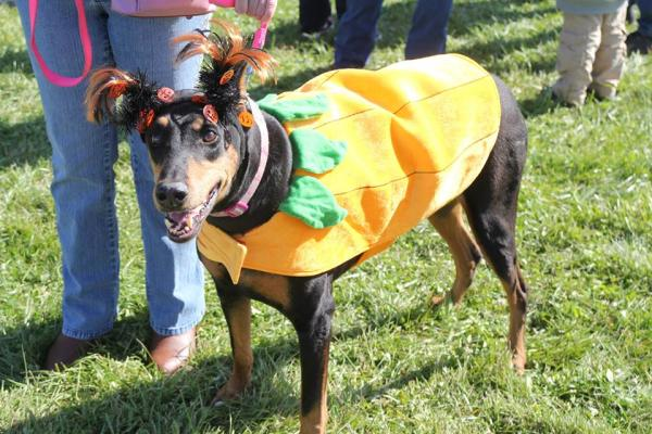 Dog Daze at the Maze - Costume Contest