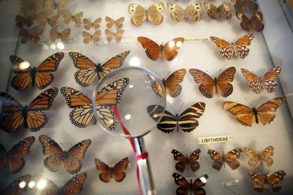 BRIT butterflies