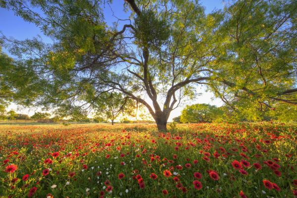 Texas Wildflowers_credit Rob Greebon