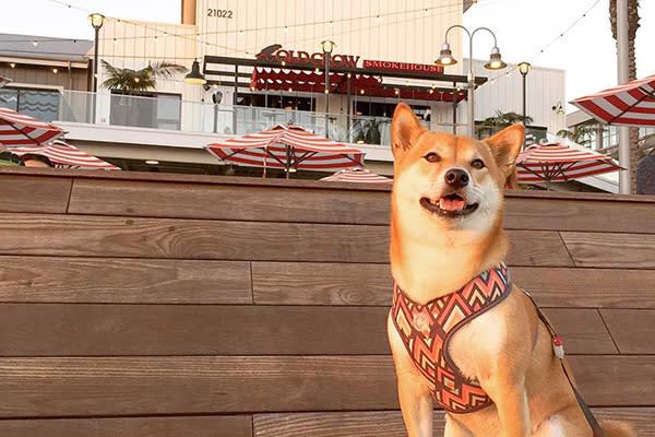 Dog Pacific City