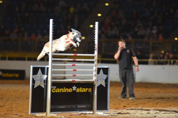 NWSS Xtreme Dog Show