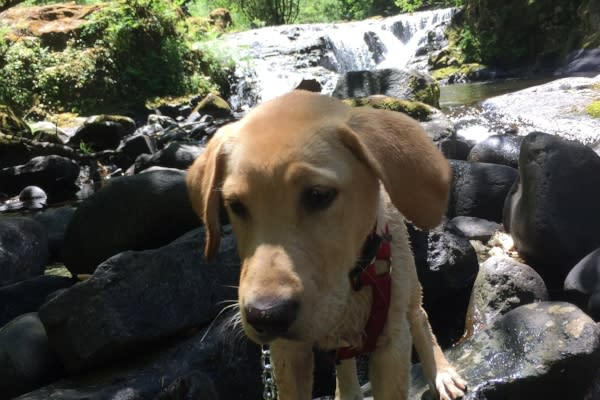 Baxter at Sweet Creek Falls by Andy Vobora
