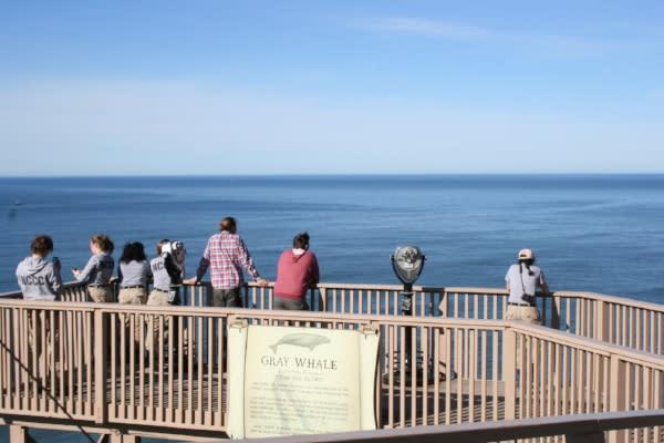Whale Watching at Sea Lion Caves by Taj Morgan