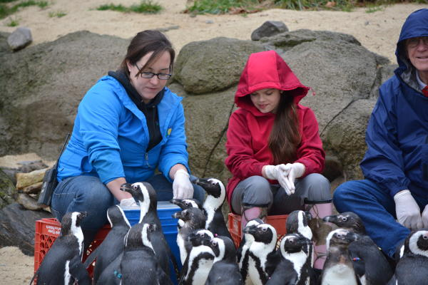 Feeding the Penguins at the Zoo