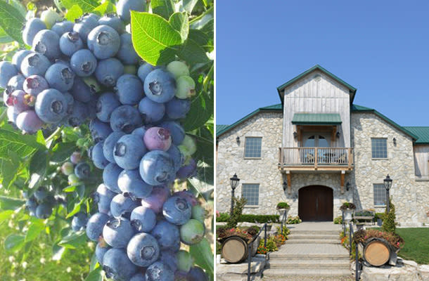 Blog - Essex Wineries